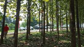 Jual tanah legalitas SHM, ditanam pohon jati emas free biaya surat