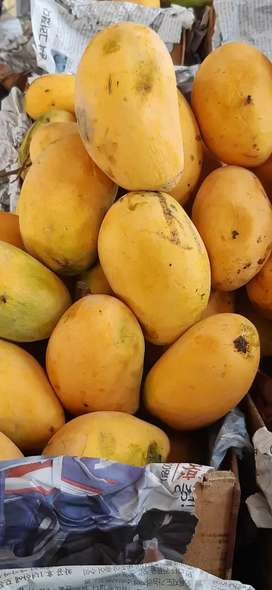 Export quality mangoes 5kg
