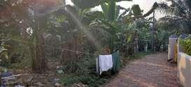6,12 Cent Original Residential Plot sale Bavappady 20-20 Panjayath