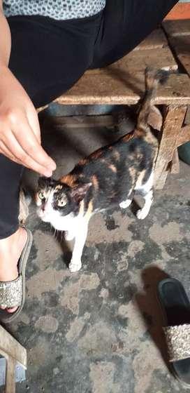 Kucing hamil antik