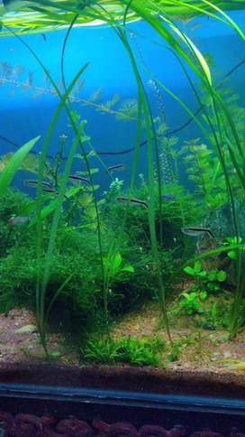 Healthy moss and aquatic plants for sale