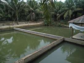 Dijual Kolam Ikan luas keseluruhan 4200 m