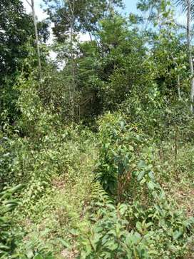 Di jual tanah kebun manggis. Seluas 1200 m. Lokasi tidak masuk mobil.