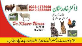 Veterinary Service for 24 hours