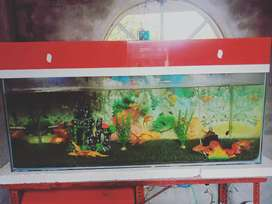 A 4ft aquarium with a good quality cover on its top.