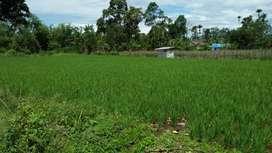 Jual tanah sawah cocok untuk perumahan. .pagar alam