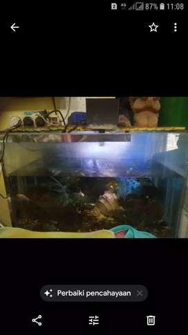 Aquarium uk 40x70