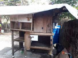 Outdoor cage for sale 3×1.5