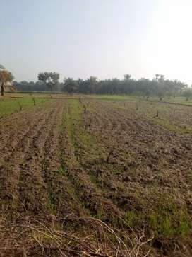 700000 per kanal agricultral plus commercial place at dhakki d I Khan