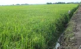 Tanah sawah pedesaan