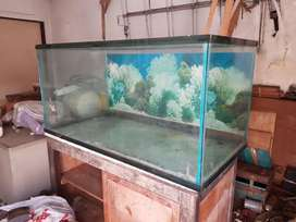 Aquarium Kaca 120x62x60