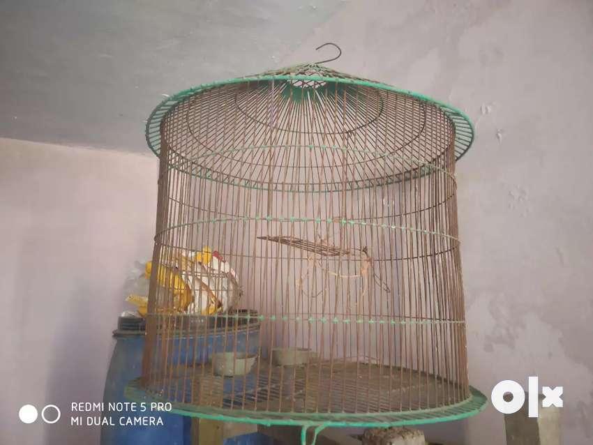 Big birds cage 0
