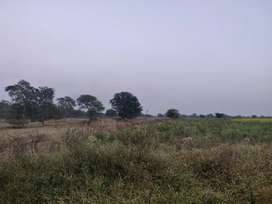Agriculture land on Dhanora Rd in front of Kadam Plaza