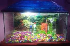 New aquarium with complete setup