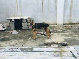 3coats dog which have age of 1 year