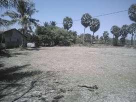 Sebidang tanah kosong di dusun Sandi