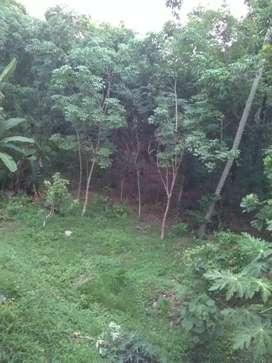 Housing plots available near kurumpanadom