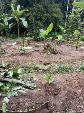 15 Cent residential land for sale with near Kalady Chengal Ernakulm dt
