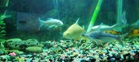 Fish Available Tunfil Bar, Sweeper, and other