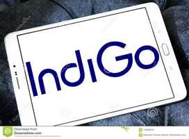Hiring for ground staff indigo airlines