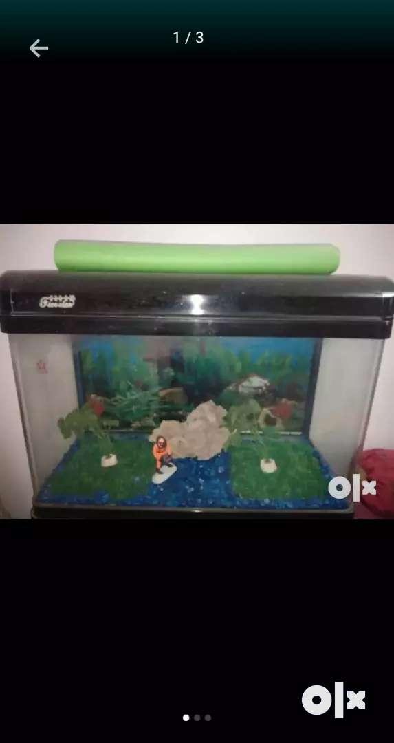 Beautiful aquarium had been selling for just 12000 0