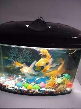Fish aquairum