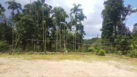 1.5 Acre farm / agriculture land coffee estate with house for sale in