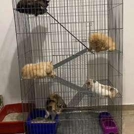 Silakan nih kk Kandang Kucing 5 lantai nyaa