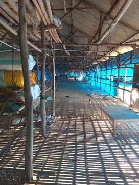 Dijual 2 Unit Kandang Ayam Broiler Kapasitas 30.000 ekor