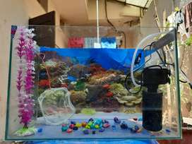 Fish aquarium with pump