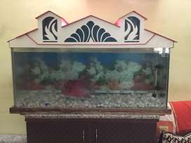 Fish tank with flowerhorn fish