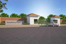 Strawberry Farm House Plot 650 Rs/SQFT