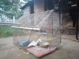 Birdcage for love birds