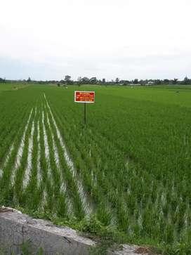 Dijual cepat tanah di Deli Serdang