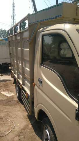 Tata ace he  only 18 manth old