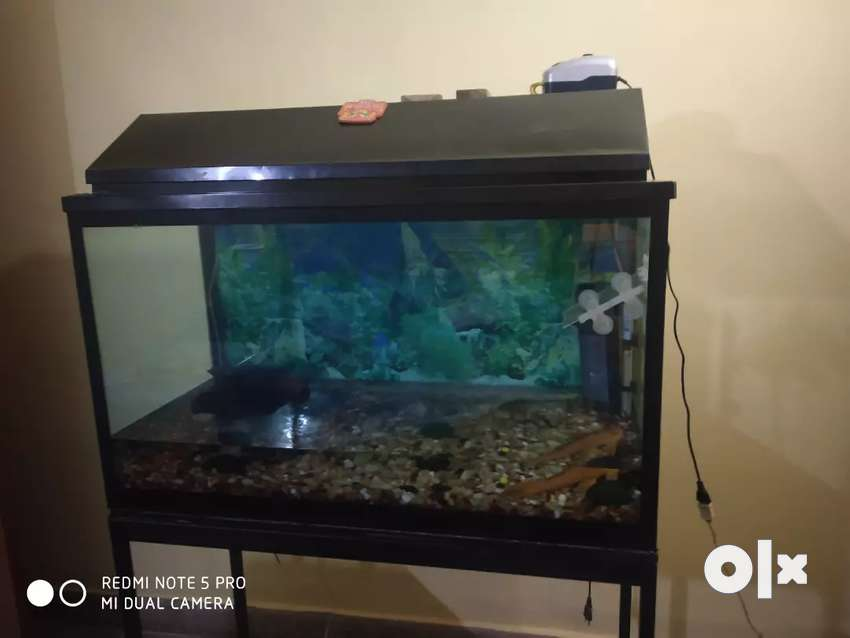 Fish tank with stand 0