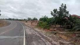 Jual kebun sawit 100 Ha di Palangkaraya Kalteng kab Gunungmas