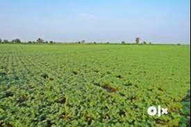 Road side agri farm for sell at bopapur , p-pohana , tal- hinghnghat 0