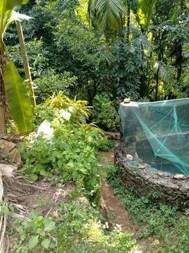 Property for sale at mundakayam