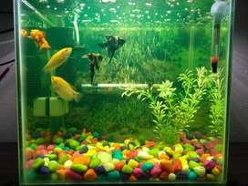 1 fit by 1 fit fish tank with fises and complete setup