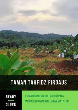 Kavling Untung Selamanya  Kebun Buah Produktif dalam Kawasan Pesantren