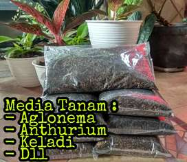 Media Tanam Tanaman Hias Aglonema Anthurium Kaladi, Dll