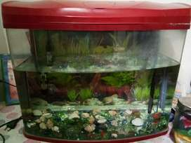Fish tank 580*280*490mm