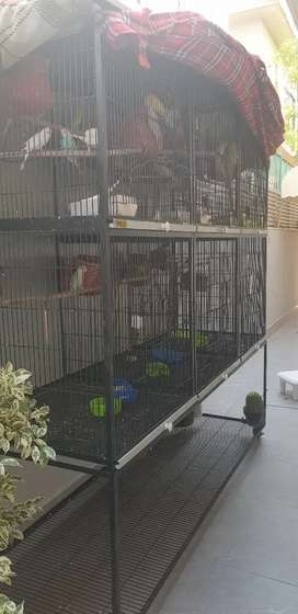 Cage of parrot