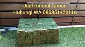 Penjual rumput jepang Lumajang siap kirim dan tanam+jasa tanam