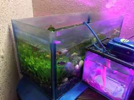 2 Aquariums in good size  for sale