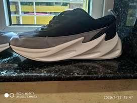 Adidas shark