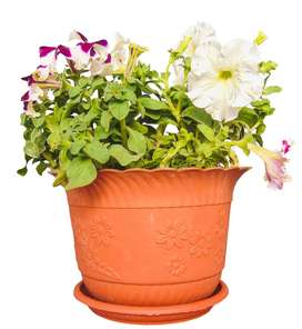 Livewell Green Flower Pots, all sizes, models @HUGE DISCOUNT