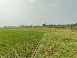 Jual sawah di rajeg Tangerang kabupaten ada rencana pembangunan jalan