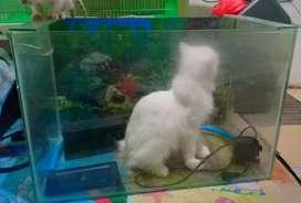 Jual 3 aquarium bekas